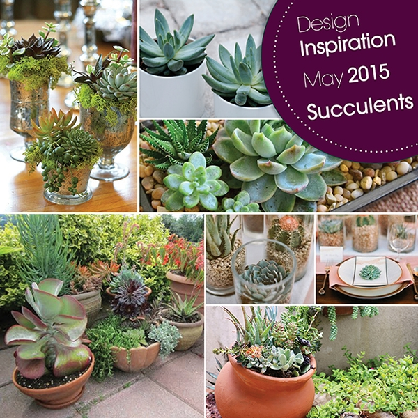 Design Inspiration May 2015 Succulents
